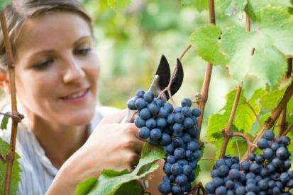 istock_000027560810-vineyard-worker