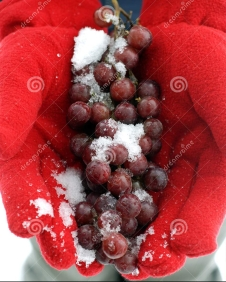 ice-wine-grapes-3980666