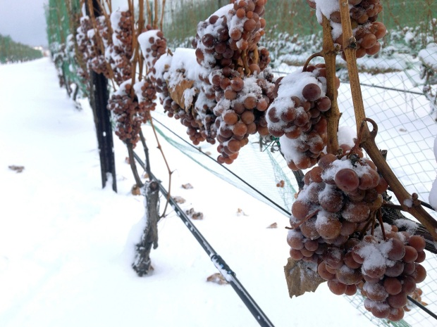 ice-wine-grapes-Andrew-McFarlane-michigan